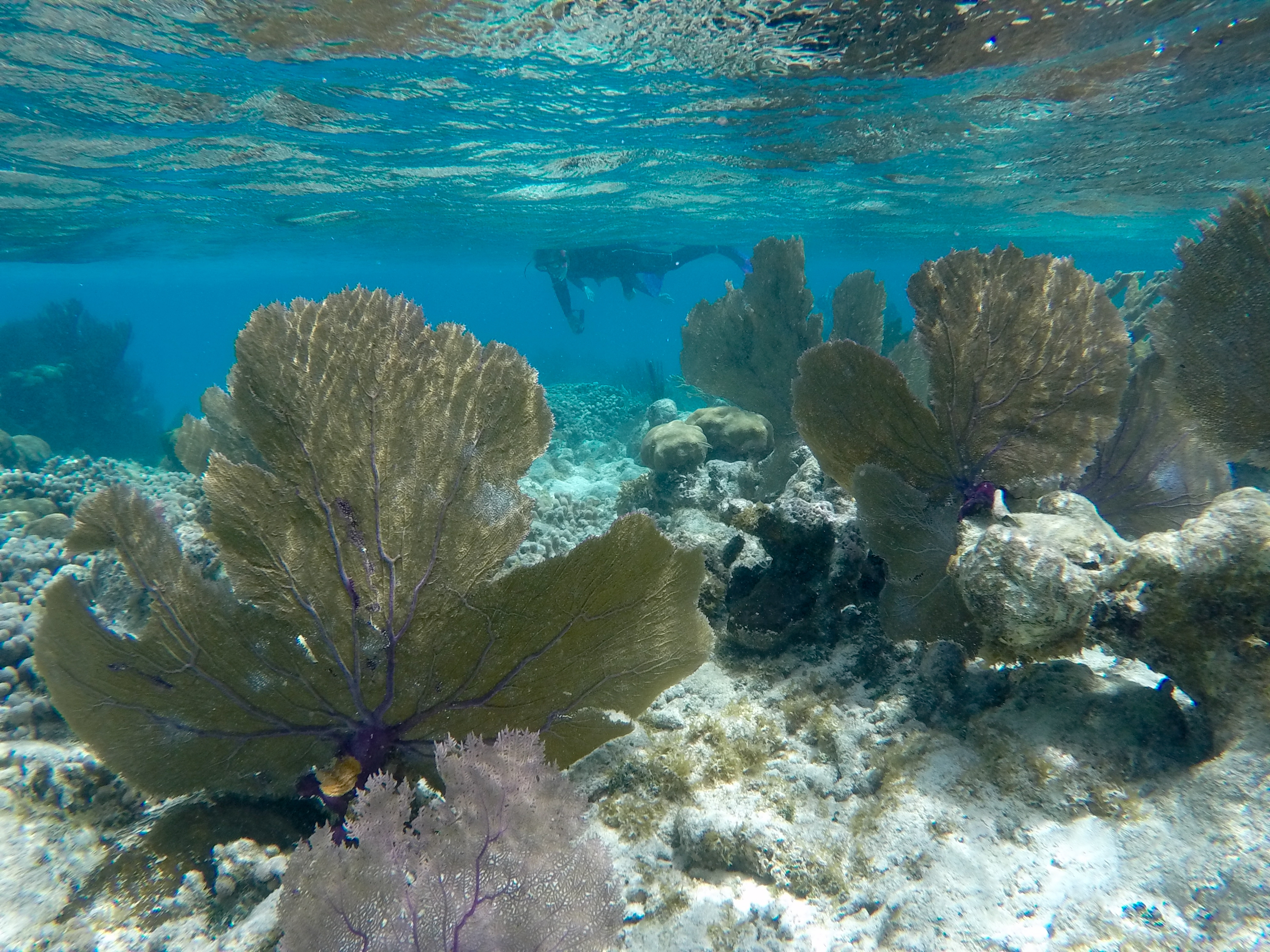 Underwater photo of coral reefs