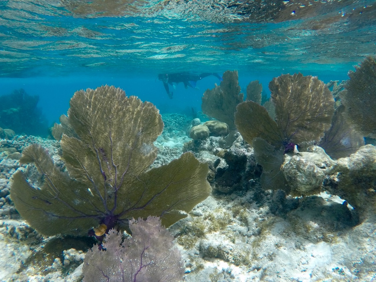 Coral Reefs Research in Belize